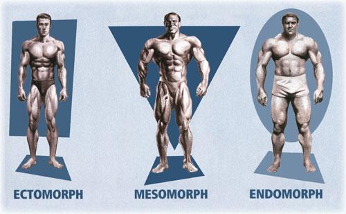 mesomorfo-ectomorfo-endomorfo1